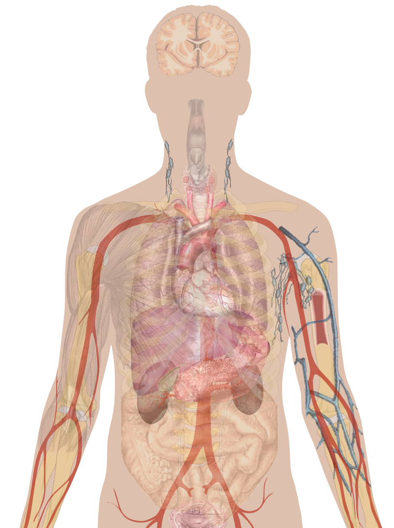 how alcohol affects the human body See exactly what caffeine does to your body with this knowing the symptoms of caffeine and its long-term effects on your body may make you think twice about.